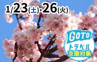 あたみ桜メイン画像
