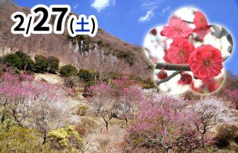 幕山ハイキングメイン画像